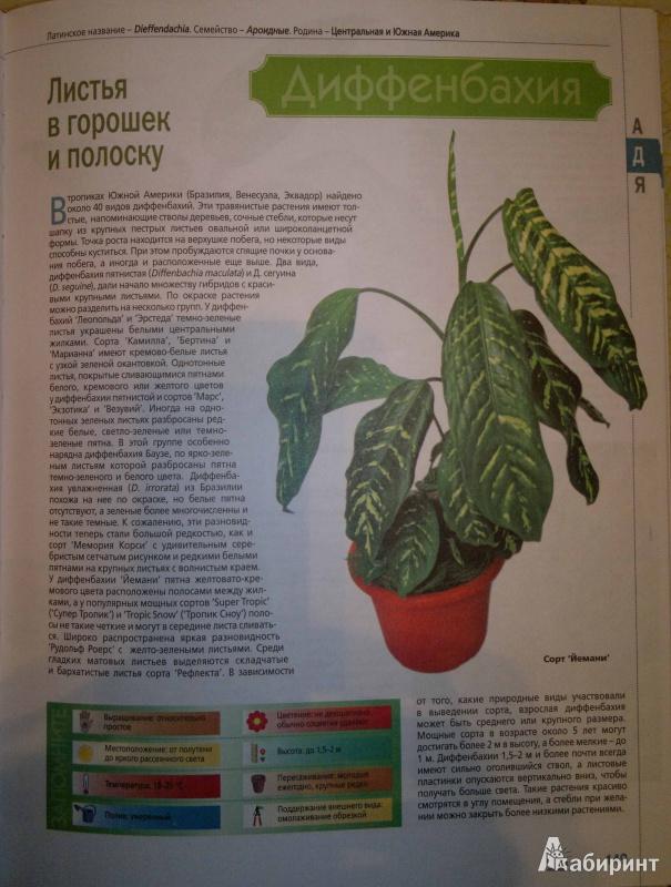 Скачать энциклопедию комнатных растений