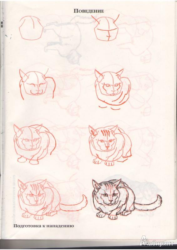 Как нарисовать девушку кошку поэтапно для начинающих