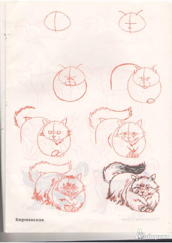 Как красиво нарисовать котика поэтапно
