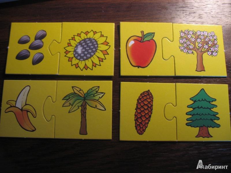Иллюстрация 1 из 7 для Ассоциации. Что где растет | Лабиринт - игрушки. Источник: Irinusya