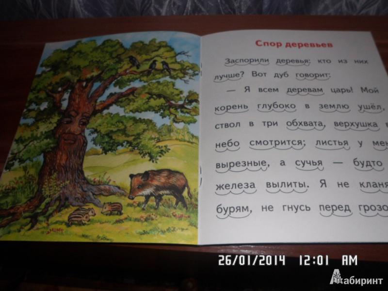 Книга спор деревьев, чпс издательство адонис (adonis)