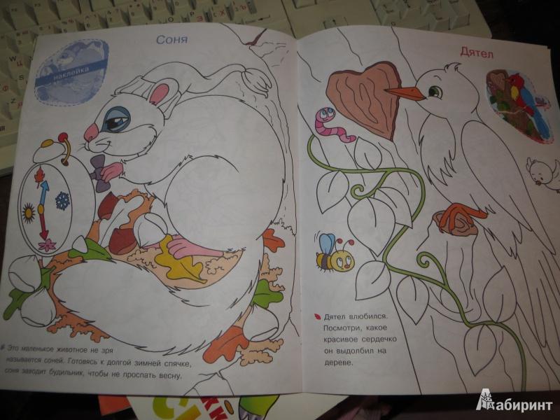 Иллюстрация 1 из 4 для Раскрась по образцу. Лесные животные | Лабиринт - книги. Источник: Ko-ren