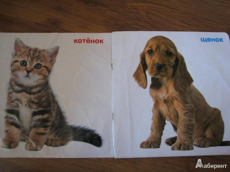 Иллюстрация 1 из 6 для Детёныши животных (от 0 до 18 месяцев) | Лабиринт - книги. Источник: Гопоненко  Алена Сергеевна