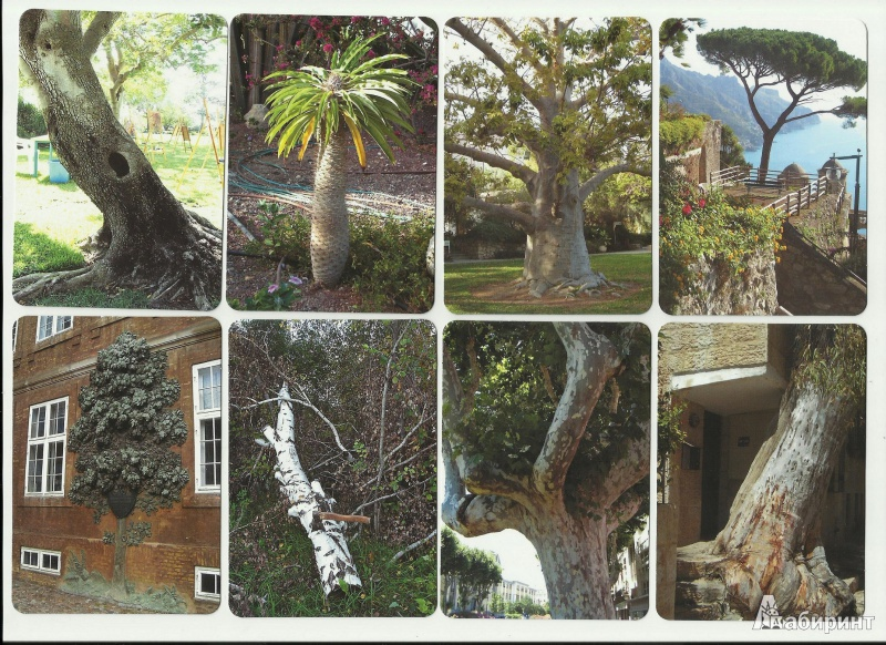 Иллюстрация 1 из 5 для Дерево как образ человека | Лабиринт - книги. Источник: |{Юлия}|