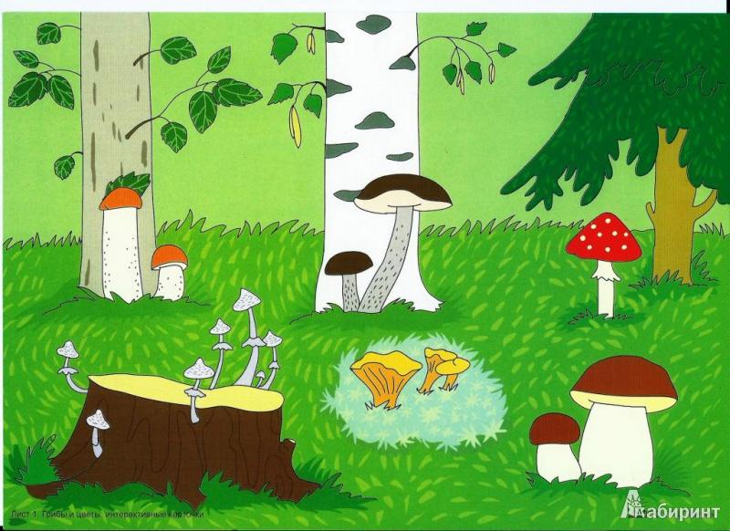 Рисунок растущего грибами