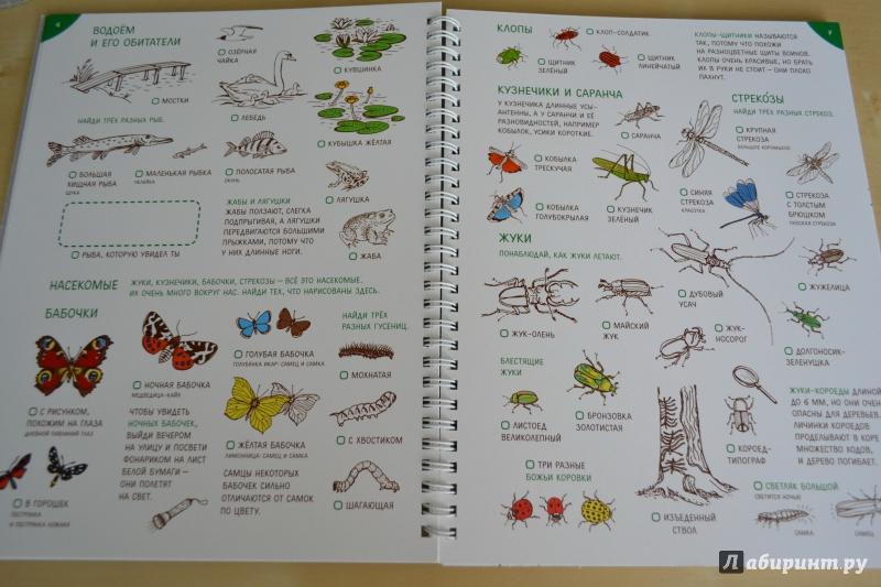 Рисунки воздушного змея для детей