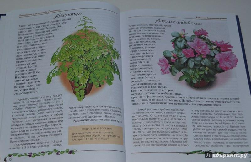 Иллюстрация 1 из 15 для Любимые домашние цветы (синяя) - Ганичкина, Ганичкин | Лабиринт - книги. Источник: OV
