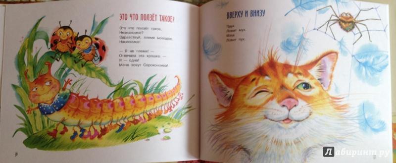 Животные картинки для детей