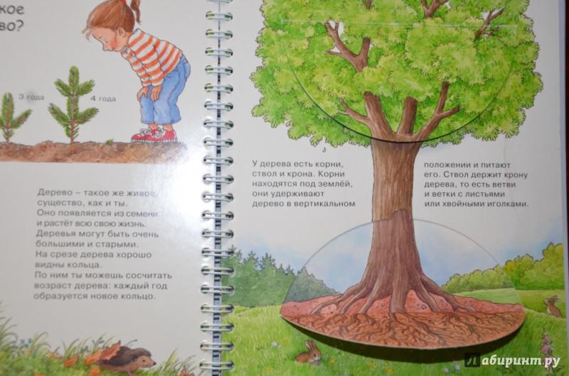 Иллюстрация 1 из 21 для Лес - Ангела Вайнхольд   Лабиринт - книги. Источник: Tanya_nvr