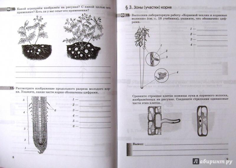 ГДЗ, Ответы к рабочей тетради по Биологии 6 класс. Пасечник В.В. 2016 г