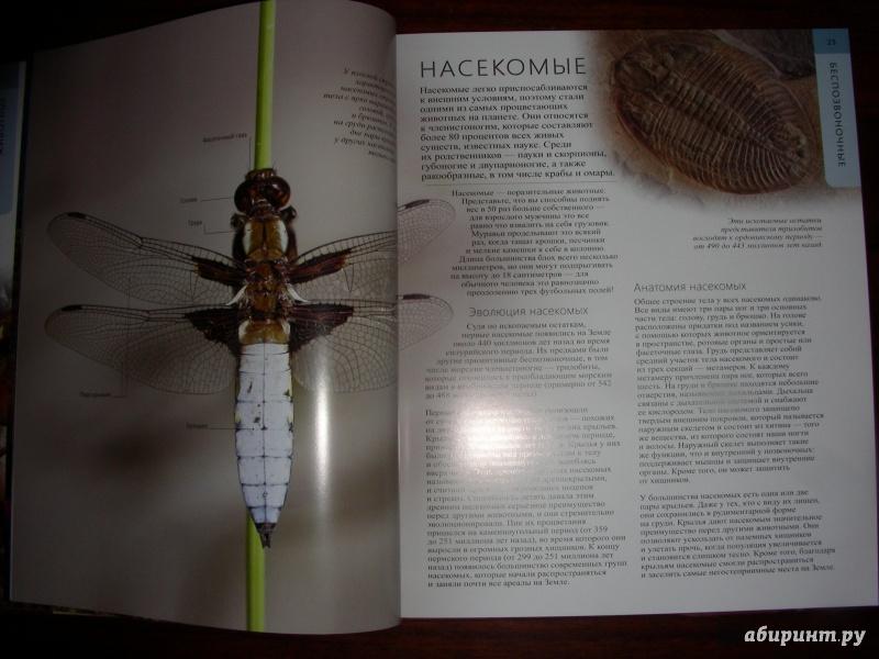 Stick insect anatomy