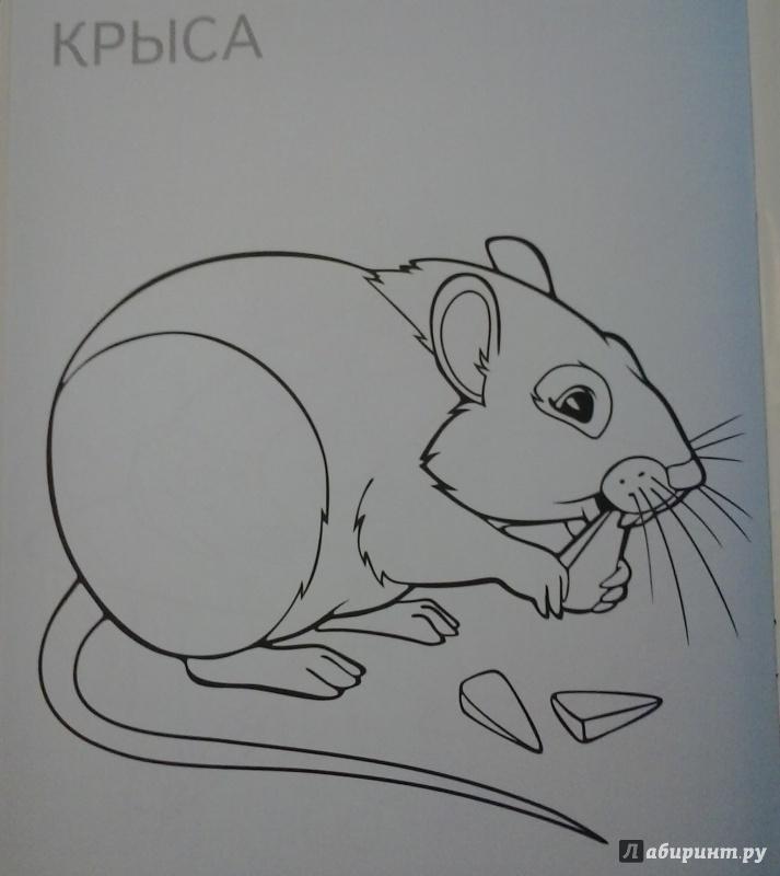 Иллюстрация 1 из 6 для Теремок | Лабиринт - книги. Источник: Абдулкаримова  Элина