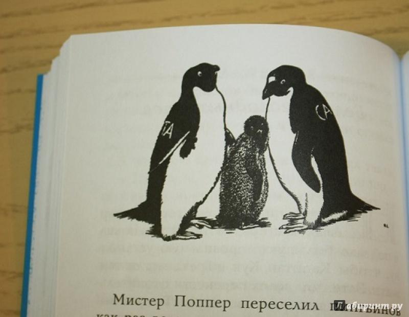 вид пингвина в мистер поппера