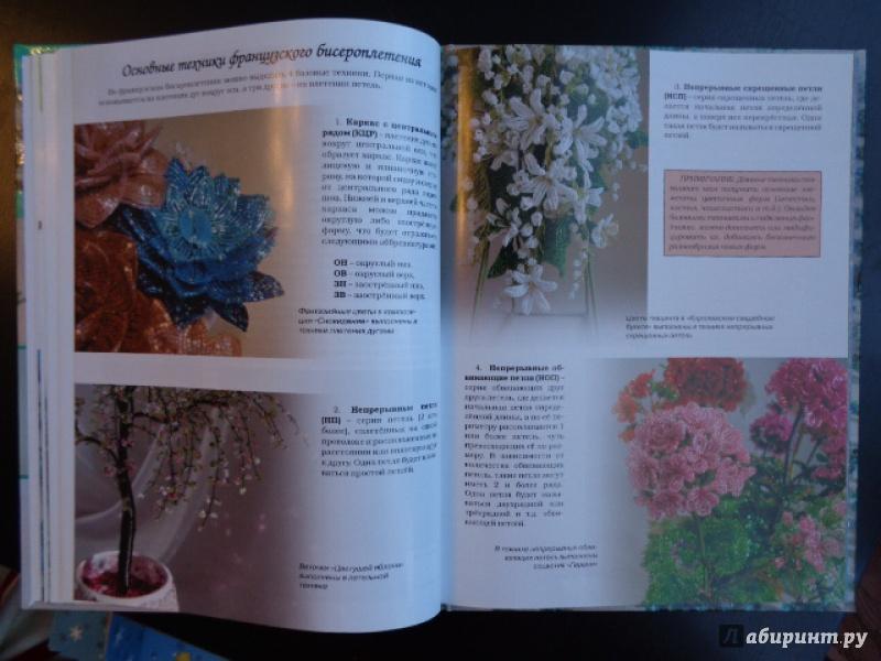 Олеандр уход и выращивание в домашних условиях цветение фото