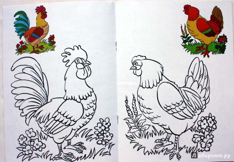 Иллюстрация 1 из 2 для Раскраска малышам. Домашние животные. 2-4 года | Лабиринт - книги. Источник: Сидоренко  Сергей