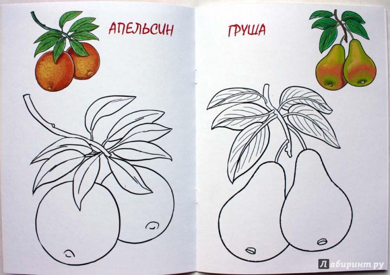 Иллюстрация 1 из 5 для Раскраска малышам. Фрукты. 2-4 года | Лабиринт - книги. Источник: Сидоренко  Сергей