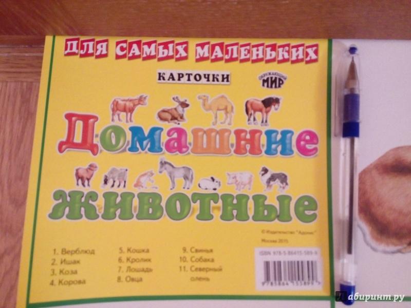 """Иллюстрация 1 из 3 для Плакат """"Домашние животные"""" (50х70 см)   Лабиринт - книги. Источник: Сулейманова  Сабрина"""