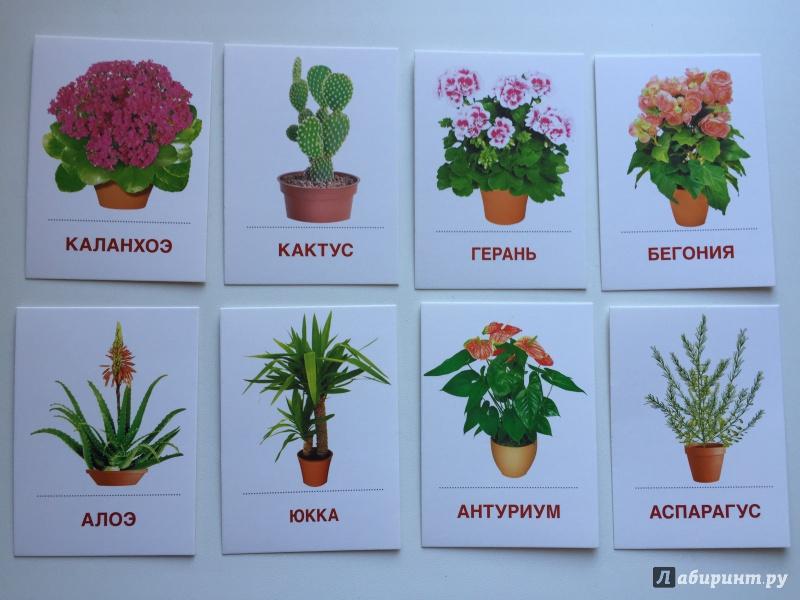 Комнатных цветов и растений