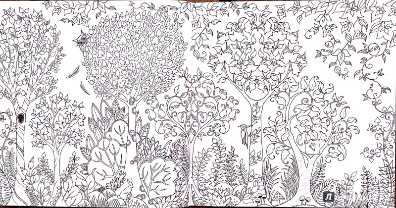 Купить раскраску зачарований ліс