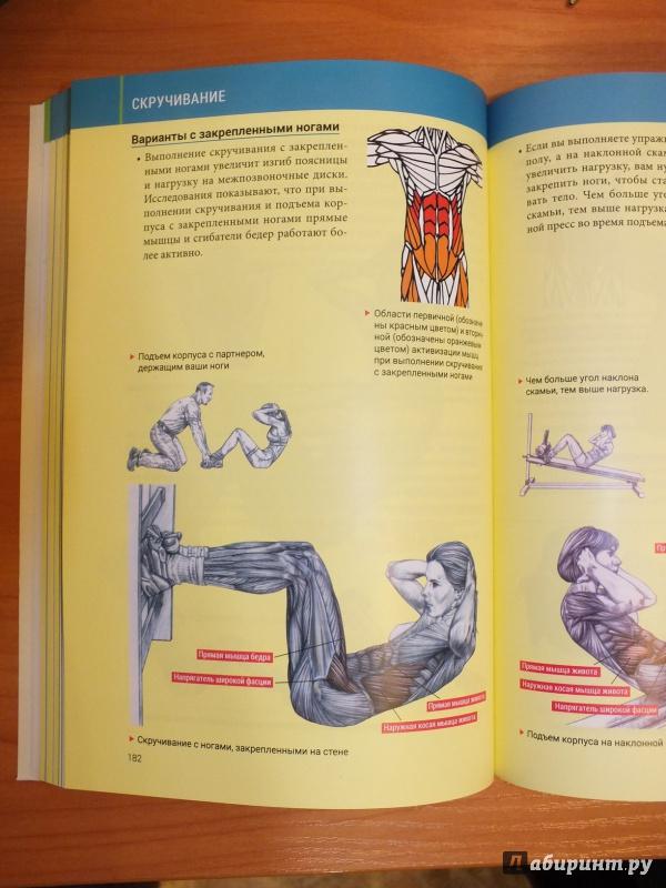 Анатомия силовых упражнений скачать fb2 бесплатно