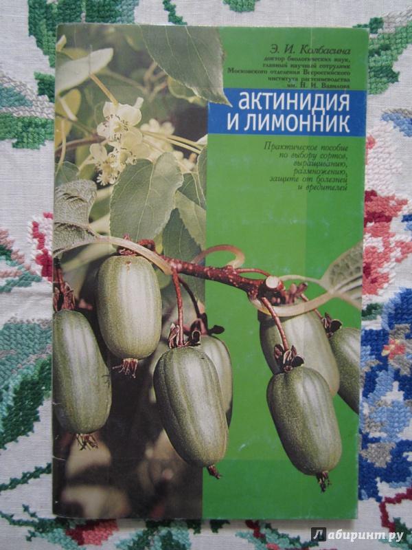Иллюстрация 1 из 8 для Актинидия и лимонник - Элла Колбасина | Лабиринт - книги. Источник: A. Fragaria