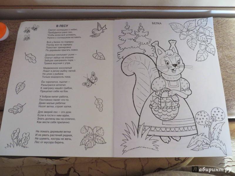Иллюстрация 1 из 18 для Кто живет в лесу - Т. Коваль | Лабиринт - книги. Источник: Несмирная  Екатерина
