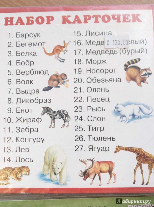Иллюстрация 1 из 3 для Набор карточек. Животные | Лабиринт - книги. Источник: annk79