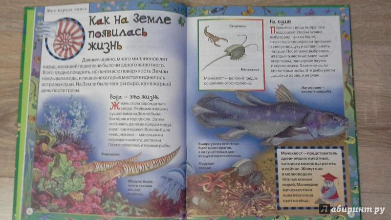 Иллюстрация 1 из 16 для Моя первая книга о животных   Лабиринт - книги. Источник: Татьян@