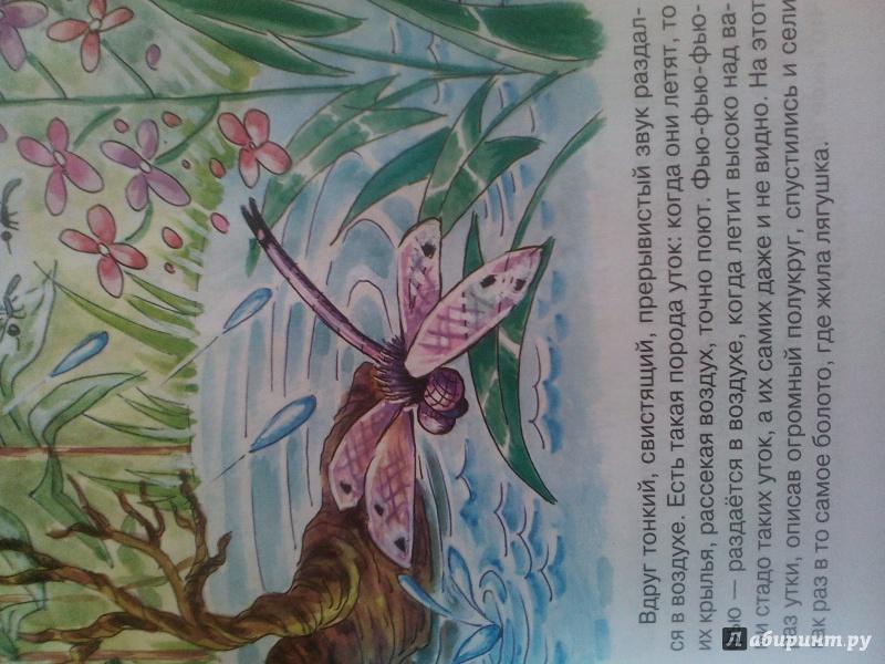 Иллюстрация 1 из 13 для Лягушка-путешественница - Всеволод Гаршин   Лабиринт - книги. Источник: Nadezhda  Marchenko