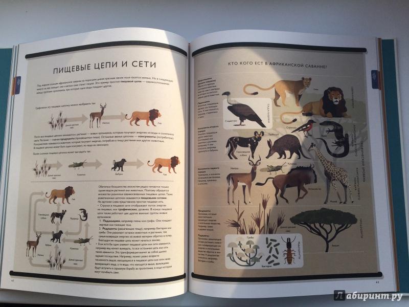 Через книгу в мир природу картинки