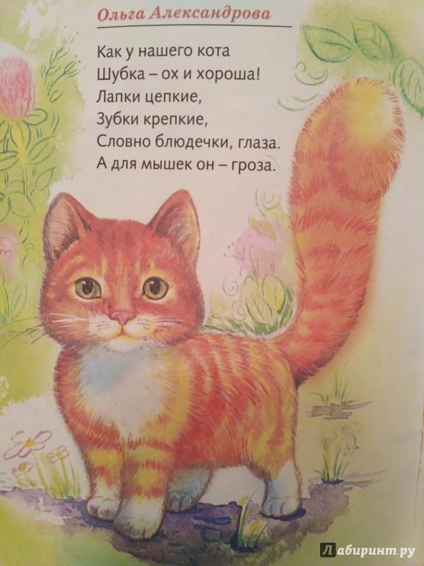 Детский стих мой кот