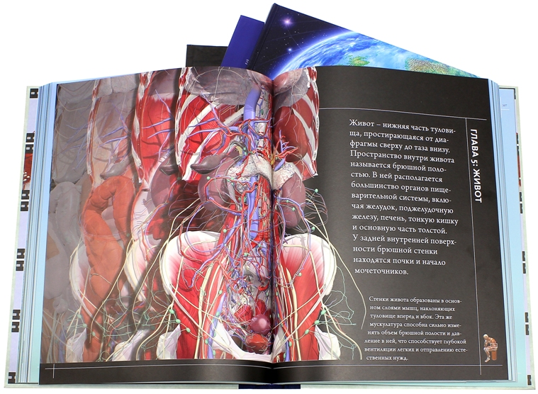 Атлас Анатомия человека 360