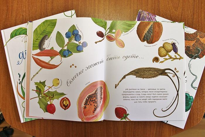 знакомим дошкольников для чего растениям семена