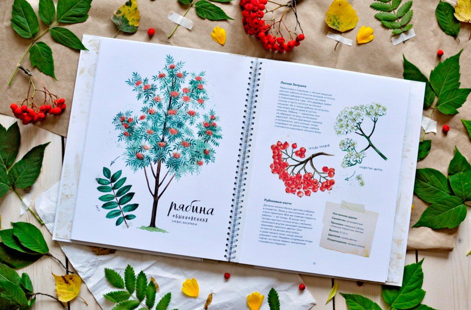 1 3. «Мой гербарий. Листья деревьев, Анна Васильева. « 035e2d35c36