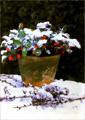 Растения в горшках. Иллюстрированная энциклопедия