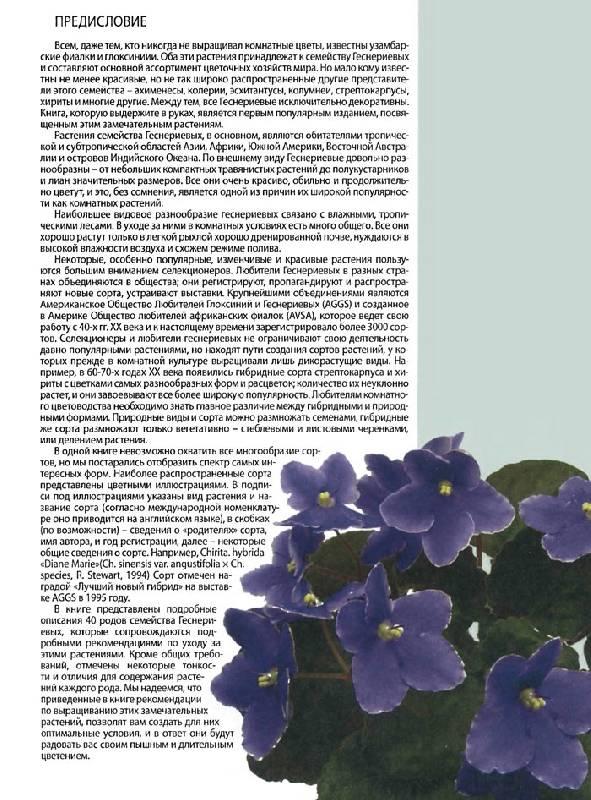 Иллюстрация 1 из 34 для Все о комнатных фиалках - Неер Ян Ван дер   Лабиринт - книги. Источник: Кнопа2