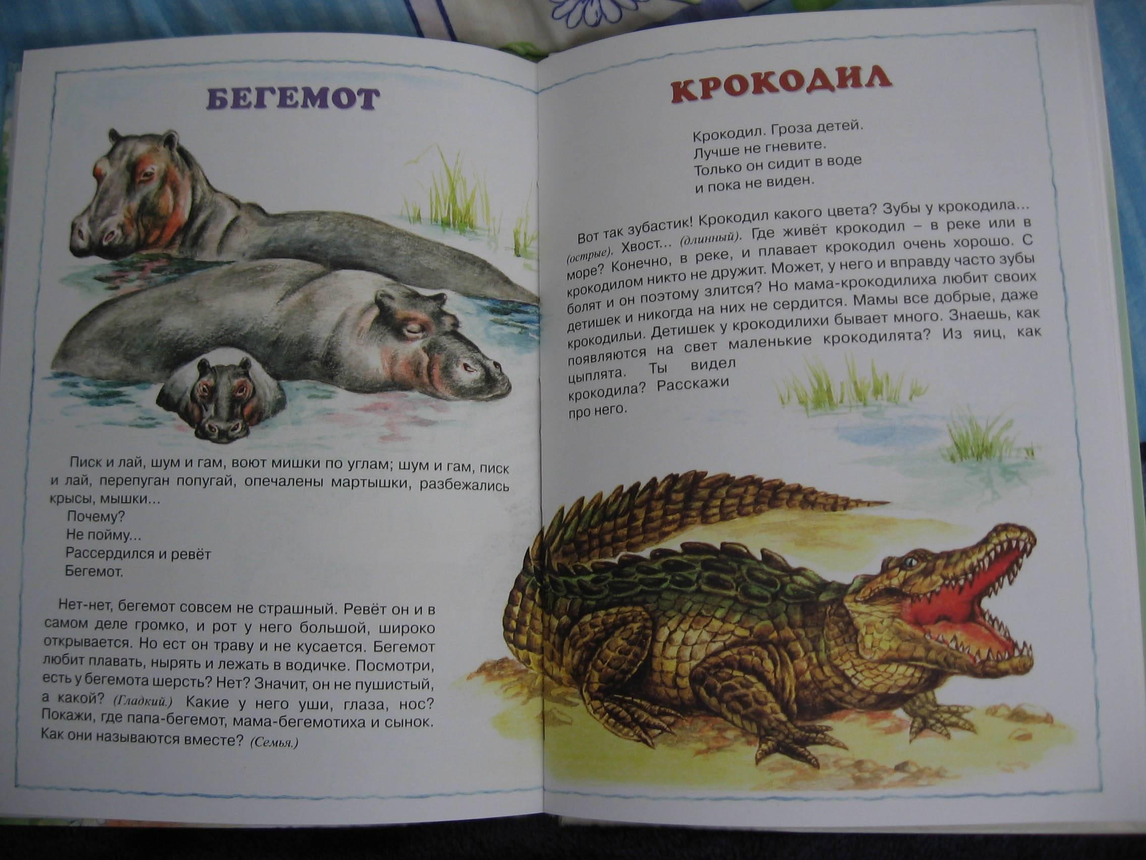 Иллюстрация 1 из 26 для Про зверей. | Лабиринт - книги. Источник: Королева Мария Юрьевна