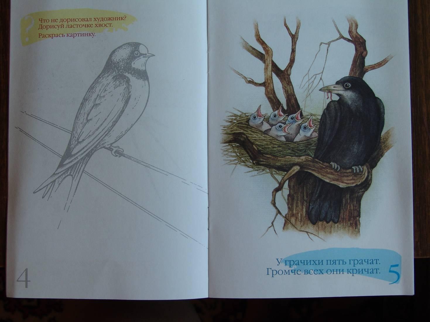 Иллюстрация 1 из 7 для Перелетные птицы. Наглядно-методическое пособие для дошкольников - Наталия Нищева | Лабиринт - книги. Источник: Лаванда