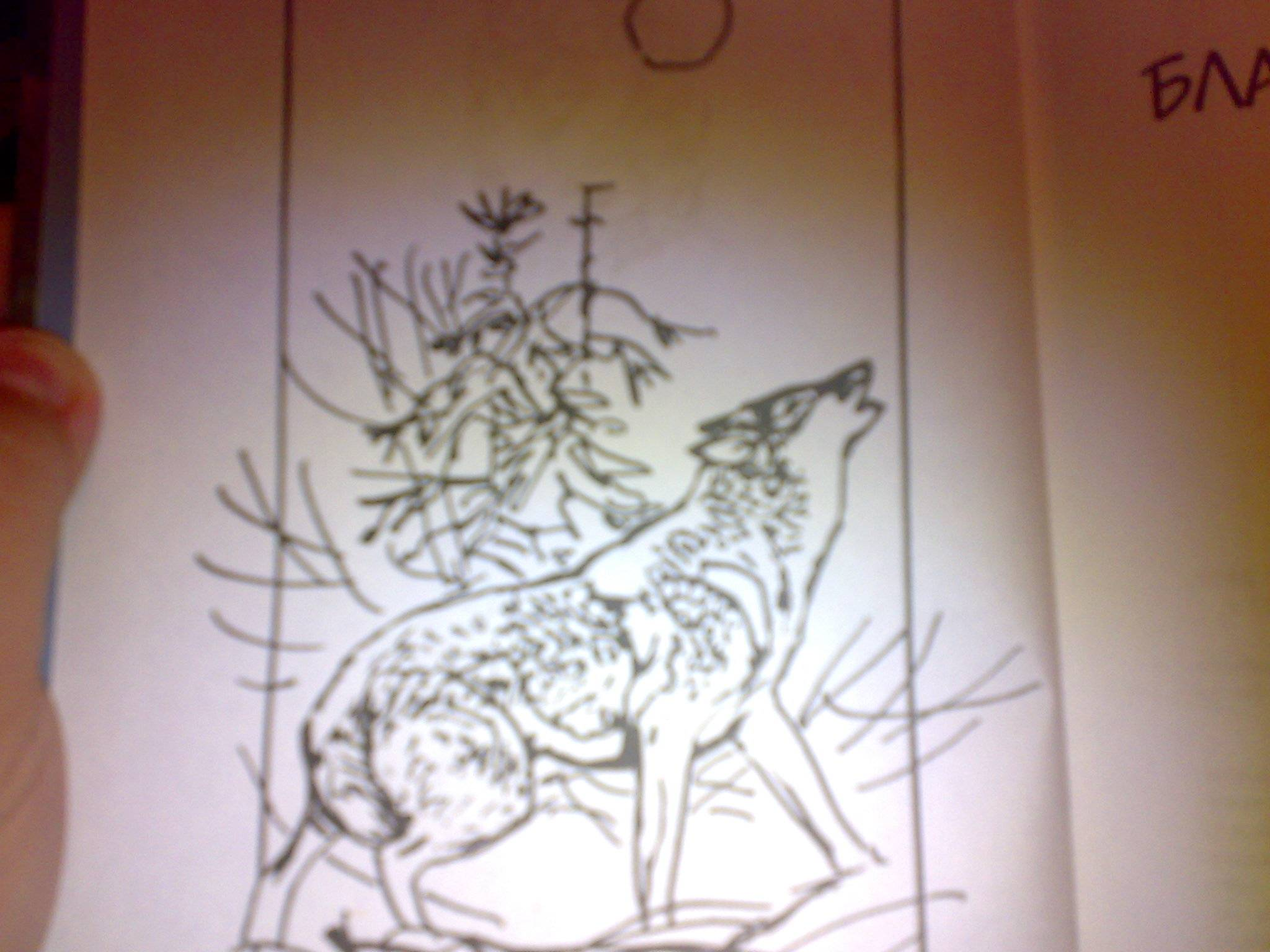Иллюстрация 1 из 2 для Казан, благородный волк: Повести - Джеймс Кервуд   Лабиринт - книги. Источник: Юлия7