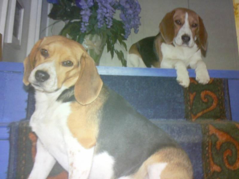 Иллюстрация 1 из 4 для Календарь 2009 Собаки (70820) | Лабиринт - сувениры. Источник: Юлия7