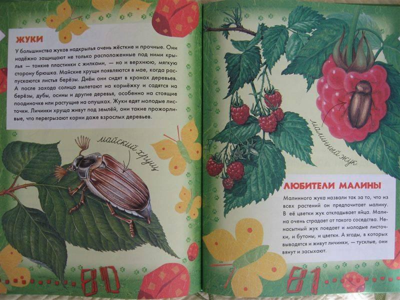 Иллюстрация 1 из 8 для Большая книга леса - Людмила Стишковская | Лабиринт - книги. Источник: Юта