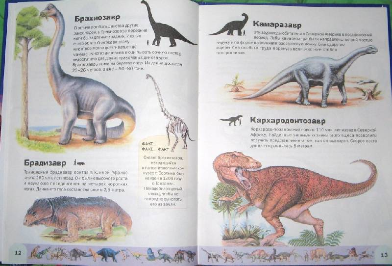 Иллюстрация 1 из 5 для Атлас динозавров - Руперт Мэттьюс | Лабиринт - книги. Источник: Читательница