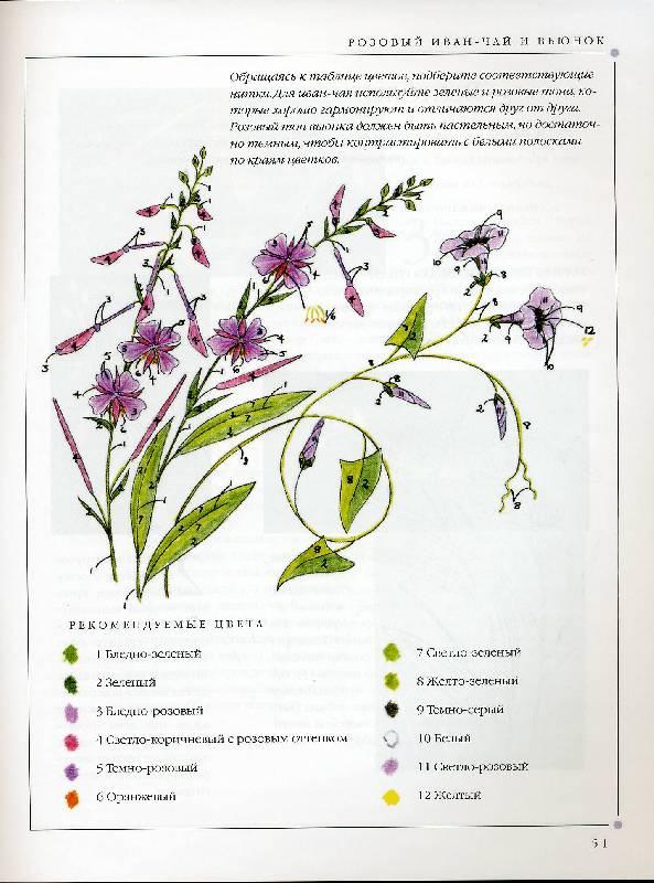 Иллюстрация 4 из 31 для Цветы. Практическое руководство - Хелен Стивенс   Лабиринт - книги. Источник: Panterra