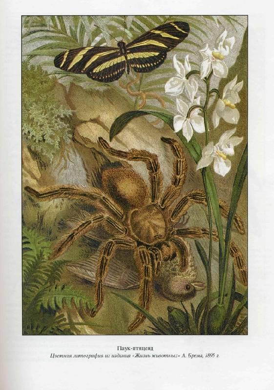 Иллюстрация 1 из 8 для Жизнь насекомых - Жан Фабр | Лабиринт - книги. Источник: Panterra