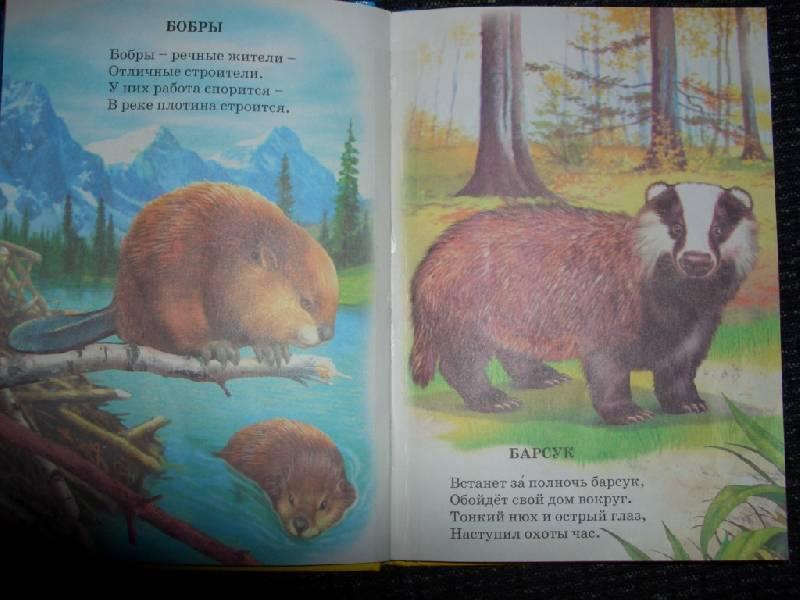 Иллюстрация 1 из 12 для Животный мир России - Владимир Степанов | Лабиринт - книги. Источник: sher