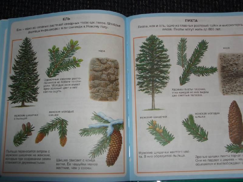 Иллюстрация 1 из 3 для Жизнь леса | Лабиринт - книги. Источник: sher