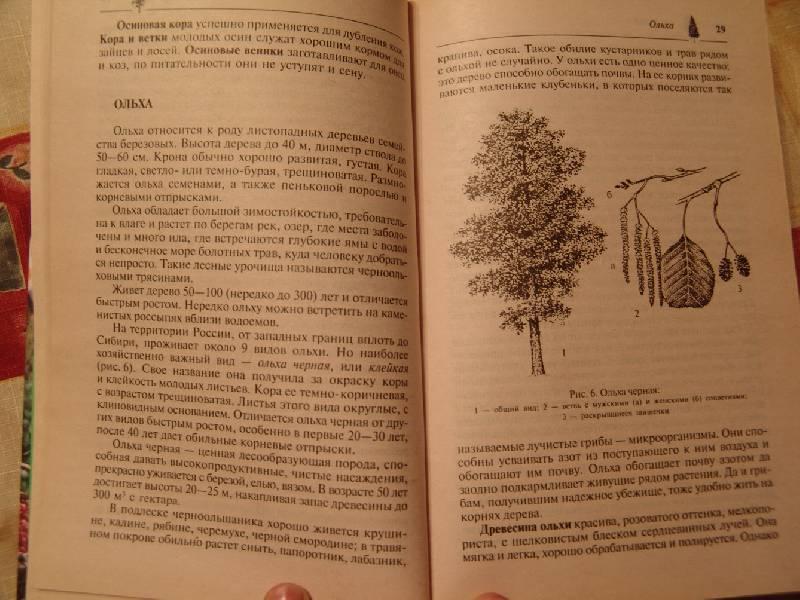 Иллюстрация 1 из 2 для Дары нашего леса | Лабиринт - книги. Источник: Лаванда