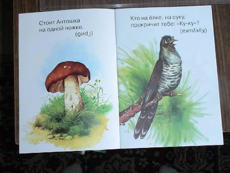 Иллюстрация 1 из 3 для Лесные загадки | Лабиринт - книги. Источник: Лаванда