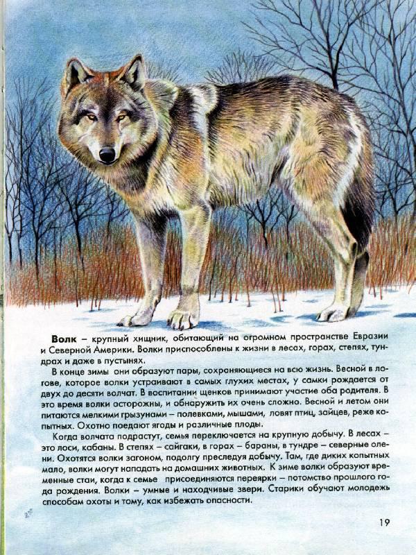 Иллюстрация 1 из 2 для Атлас животных для школьников   Лабиринт - книги. Источник: *  Татьяна *