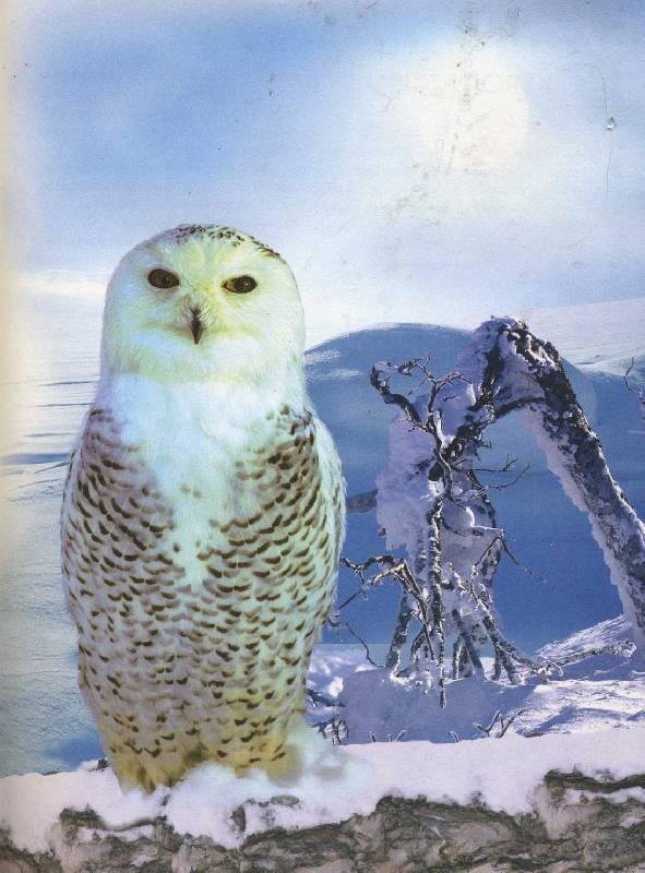 Иллюстрация 1 из 25 для Энциклопедия животного мира - Борис Сергеев | Лабиринт - книги. Источник: ilamtel